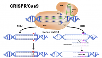 cas9_diagram